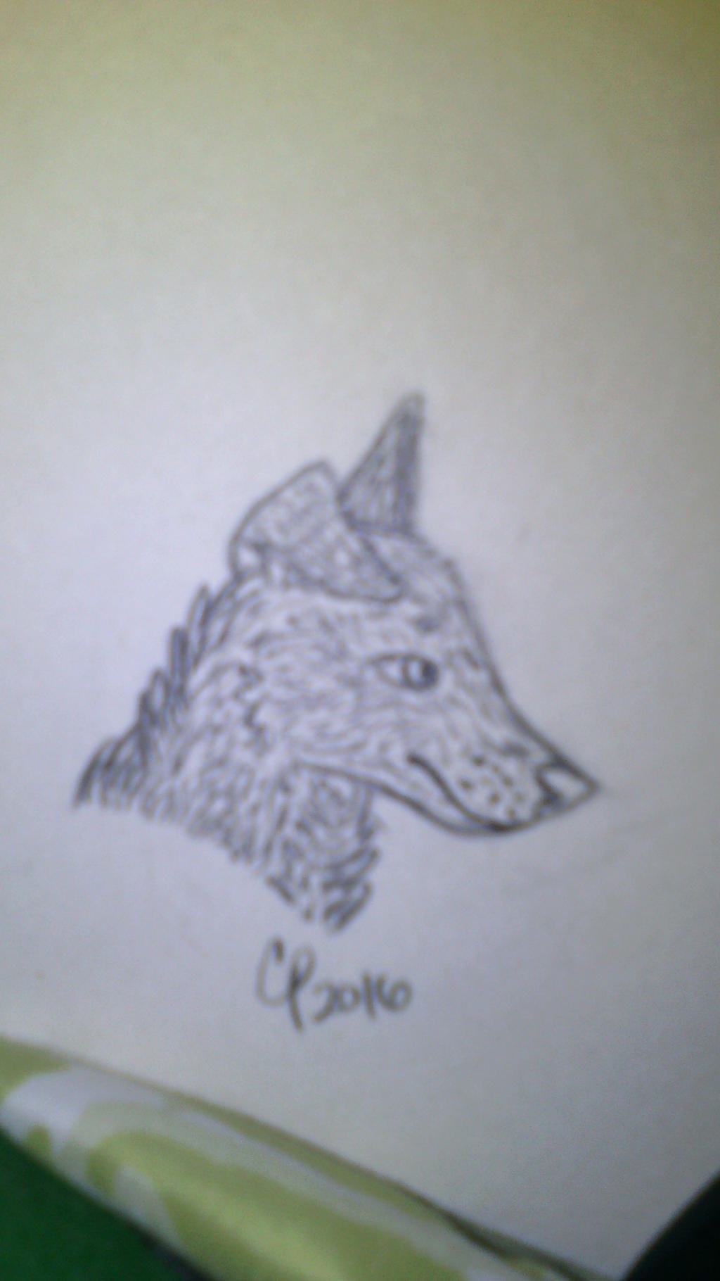 dog sketch by Wolf--Prime