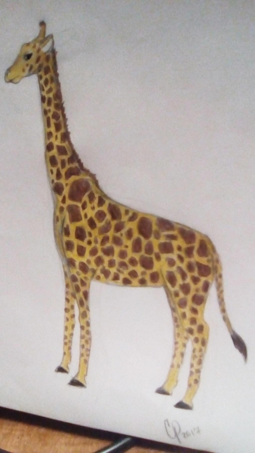 Giraffe by Wolf--Prime