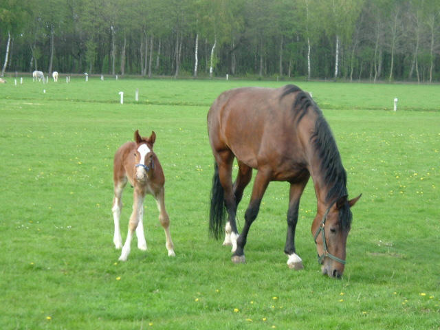 small horse big horse to download small horse big horse just right ...
