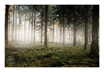 Hiding deep inside the forest by Moombax