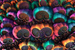 Surf Shells