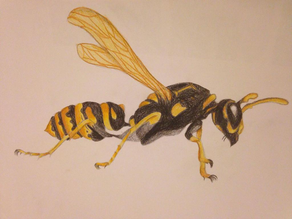 Wasp by toastiibunz