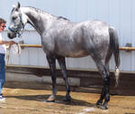 Fair Horse 1