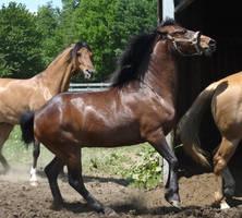 Pony Boy 2 by shi-stock