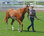 Halter Horse 11
