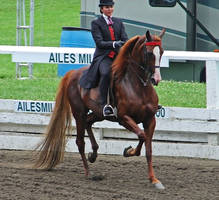 National Show Horse 1 by shi-stock