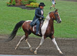 National Show Horse 6