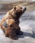 Bear2 stock