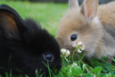 My little rabbits by LoveYouSoAlways