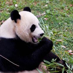 Omnom Panda by lupiniastudios