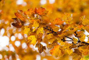 Maryland Autumn by lupiniastudios