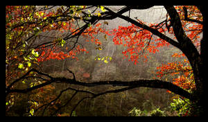 Raindrops and Red Leaves Color