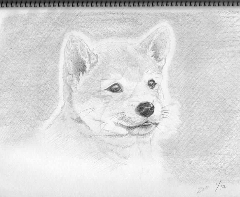 Shiba dog puppy pencil sketch by theblindalley on deviantart