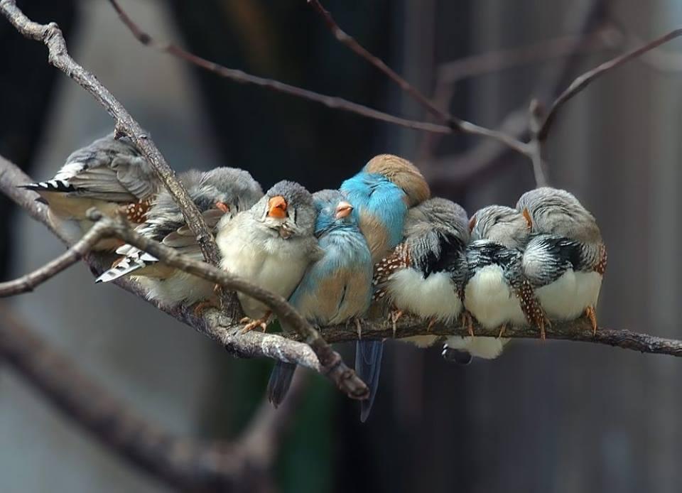 تجمع-پرندگان