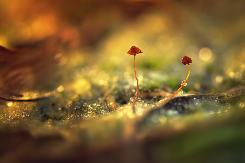 Wild Mushrooms by djusa