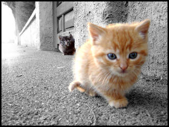 chatons... by Brout-IcO