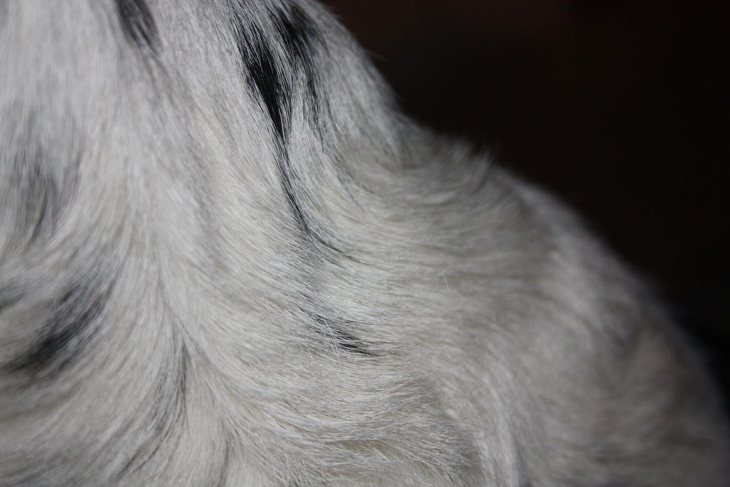 Dogs Neck by Flyingfishflops