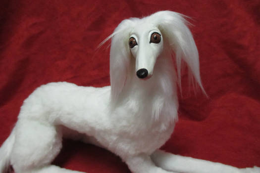 Saluki Close-Up
