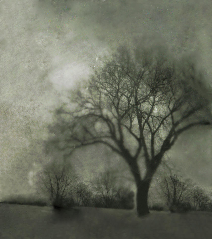 Pinhole Tree by sexylibrarian