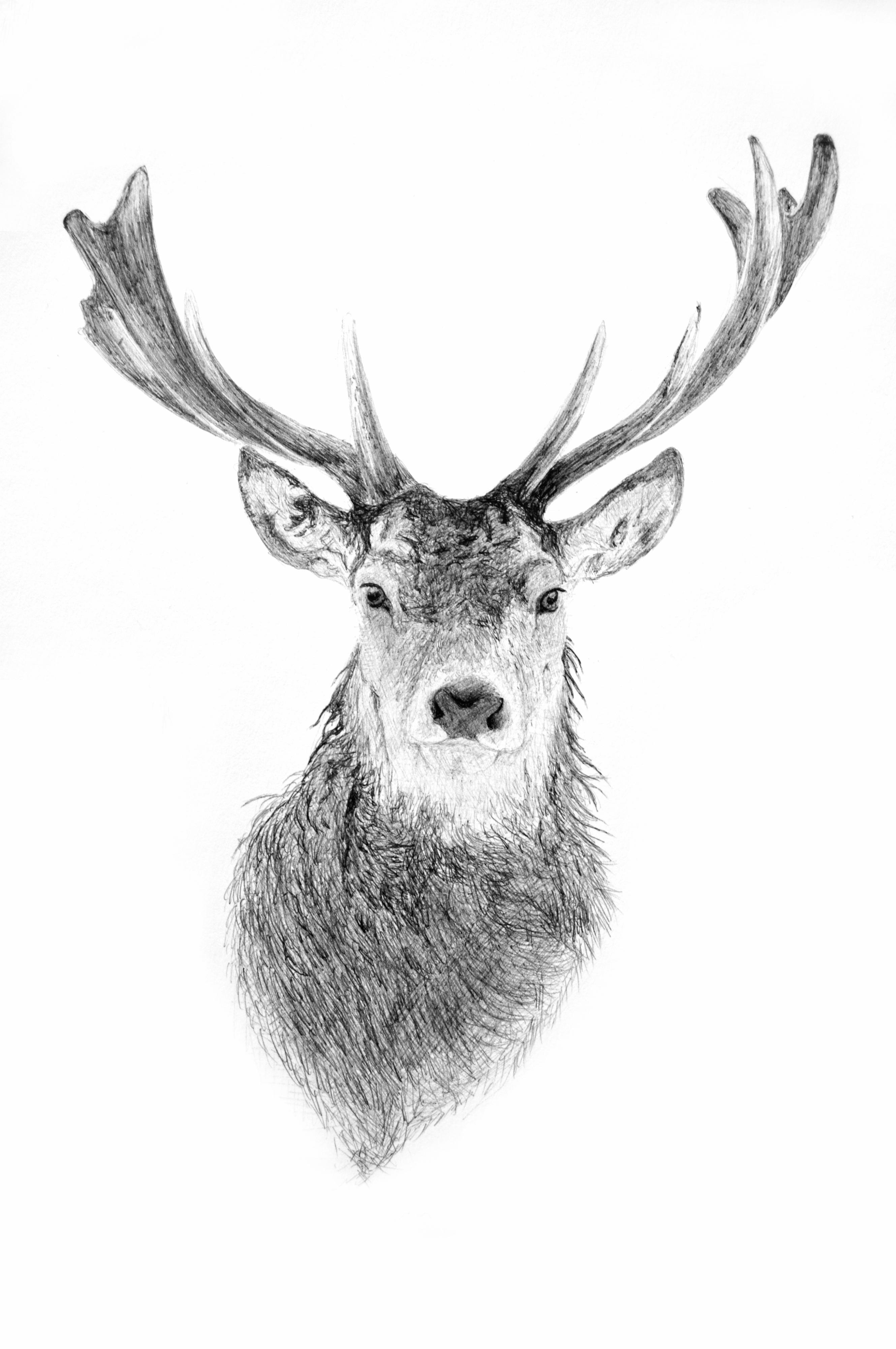 Reindeer head drawing - photo#8