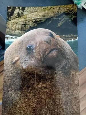 Random 3 : Seal, :V