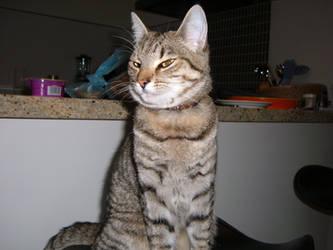 my cat Jinx by xyinparadise