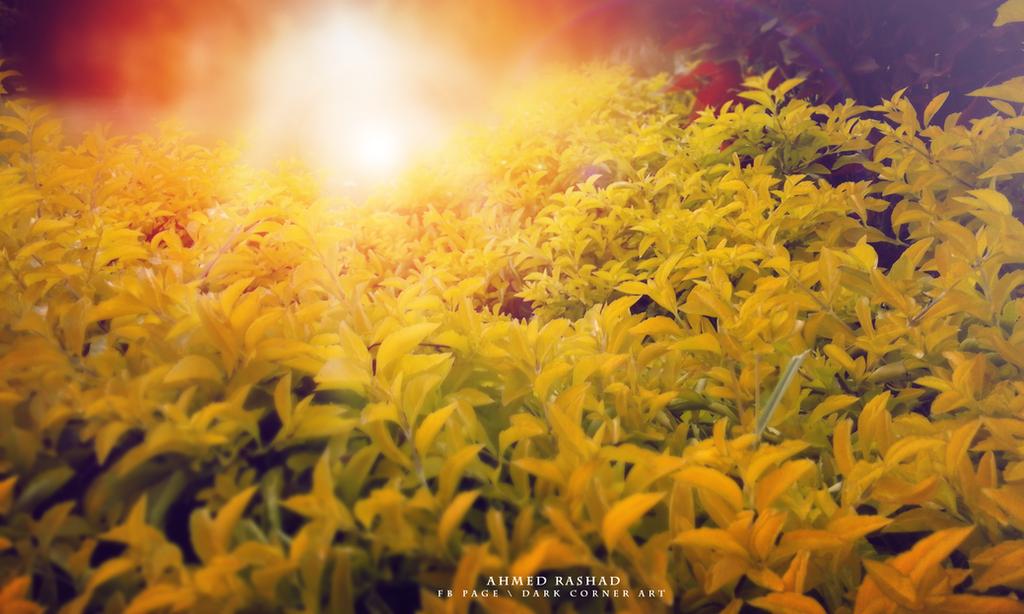 flowers by Ahmed-Rashad-Art