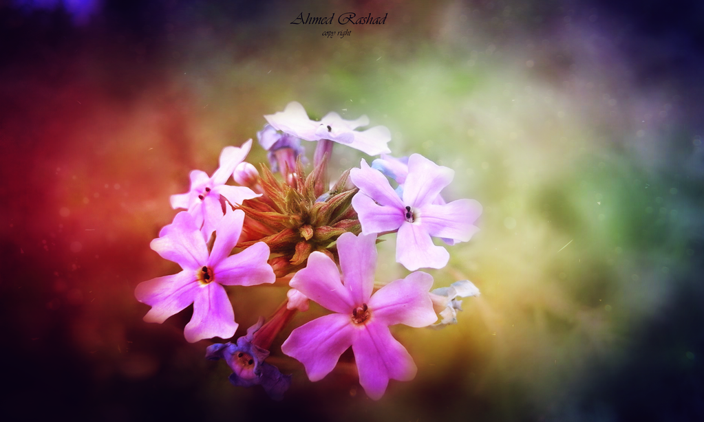 colored flower by Ahmed-Rashad-Art