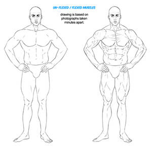 Masters Of Anatomy Unflexed Versus Flexed Muscles