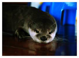 Otter by thundermistress