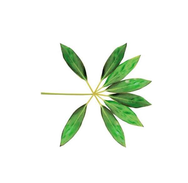 [SHARE PNG] EXO The War 'Ko Ko Bop' Logo PNG @3 by ...
