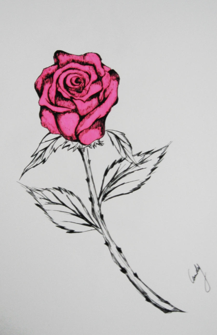 rose drawing by andy023 on DeviantArt