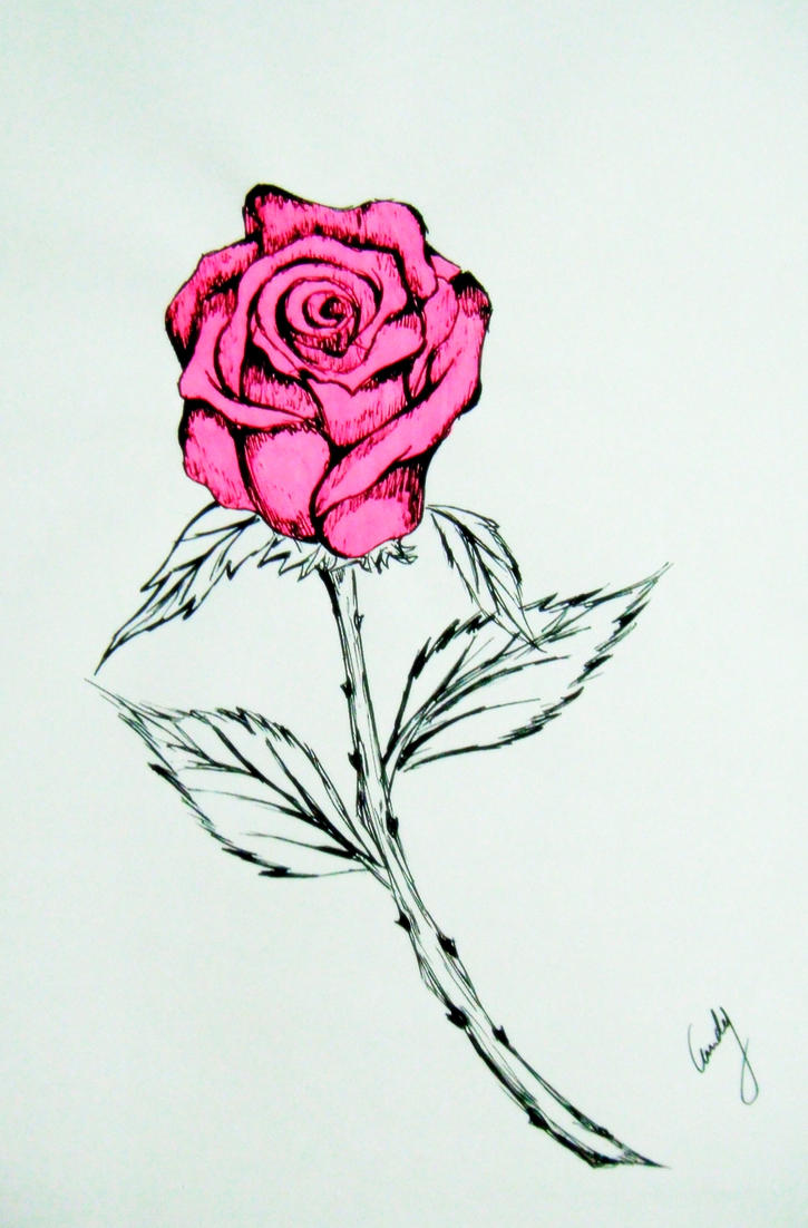 how to draw a pink rose
