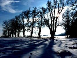 trees shadows