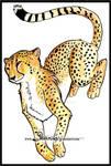 Jump in cheetah