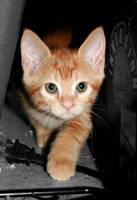 Hiding Kitten by Paranoid-Duckkie