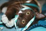 Kitten Ribbons by Paranoid-Duckkie