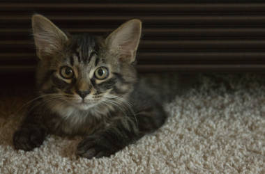 No Name Kitten by Paranoid-Duckkie