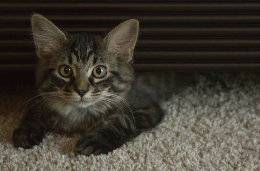No Name Kitten