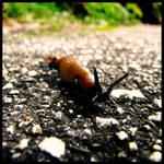 Invader Slug