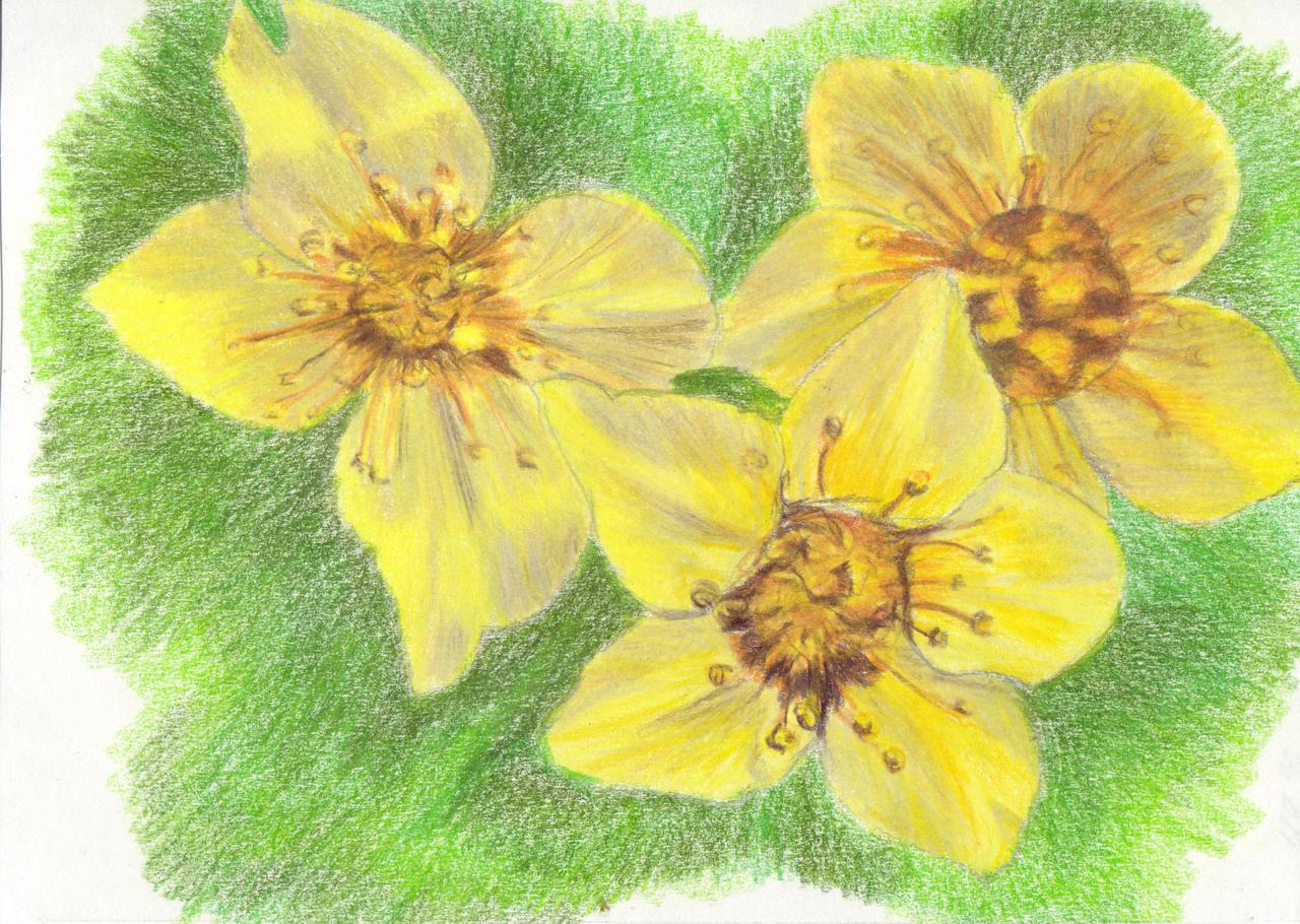 Flowers for Mom by mkmars on DeviantArt