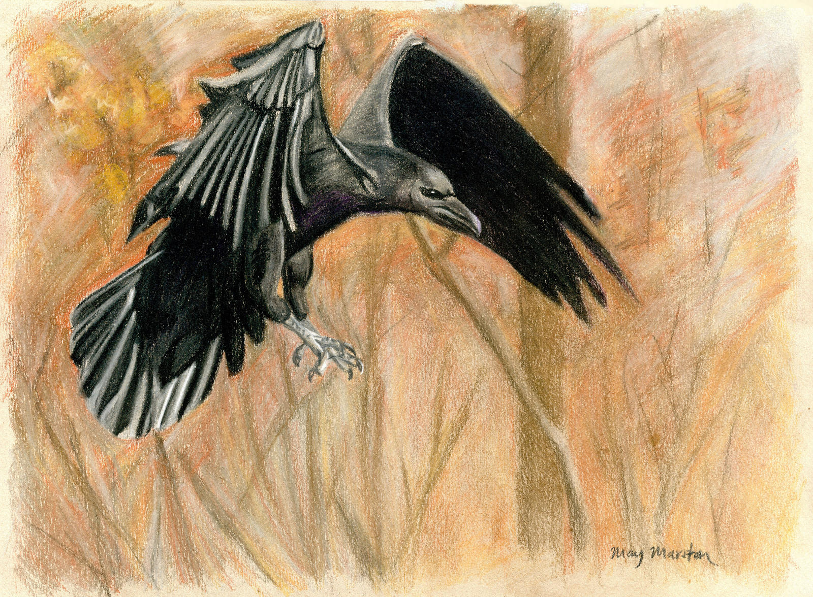 Crow Flying Towards - ...