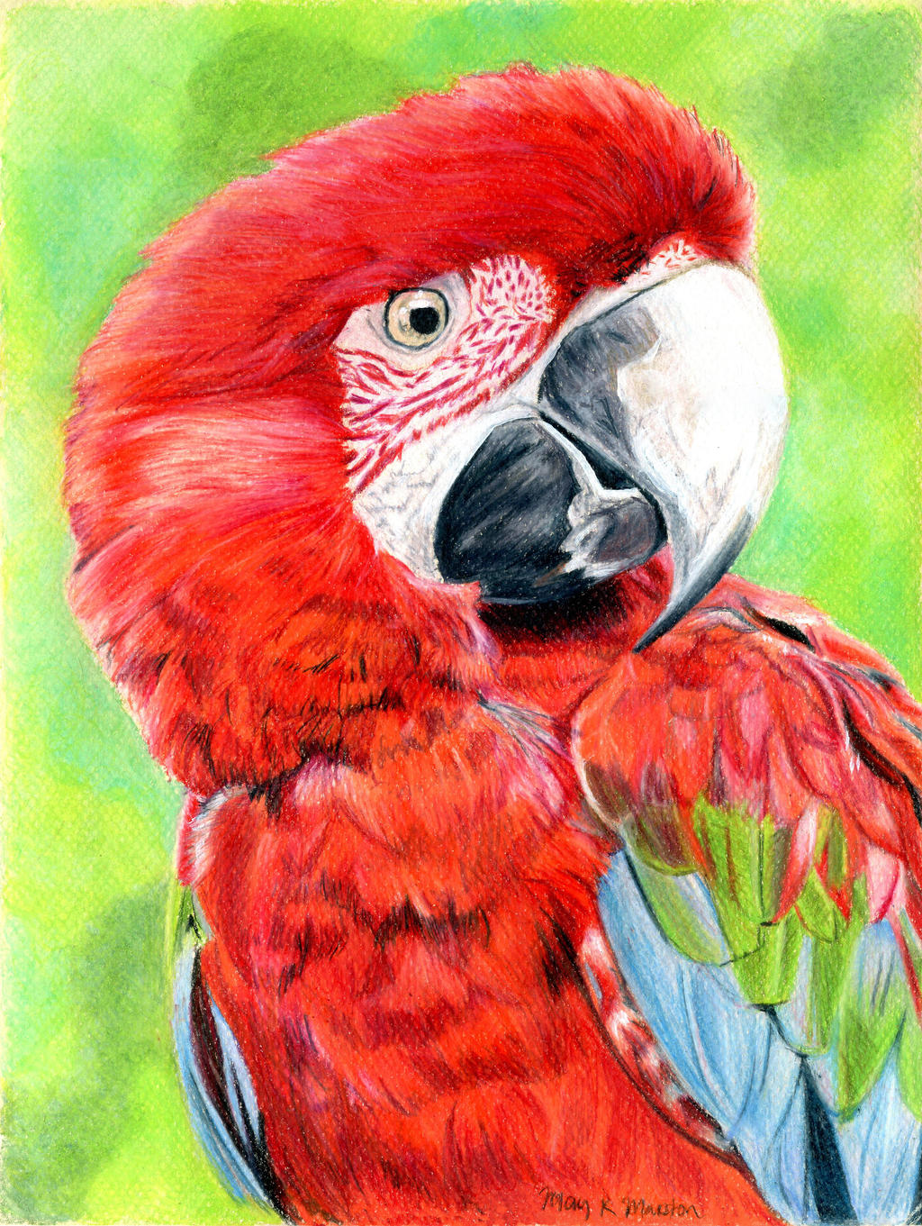 Macaw by mkmars