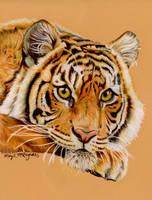 Tiger by mkmars