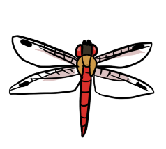 Red Dragonfly by ShiroAC