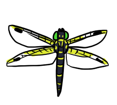 Banded Dragonfly by ShiroAC