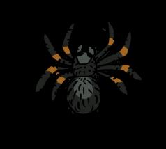 Tarantula by ShiroAC
