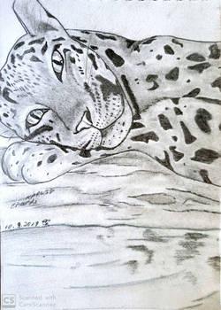 Lazing Cheetah (FINAL DRAFT)
