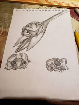 Doodle of the Day: Tree Frogs