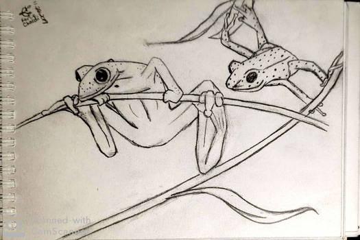 Leap Frogs (sketch)